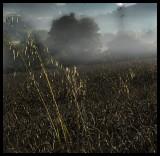 Windmill and misty morning01 72.jpg