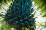thistle-up-close2.jpg