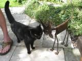 Cats at David and Jan's