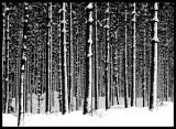 Graphic wood near Emmaboda