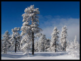 Winter landscape Dalarna