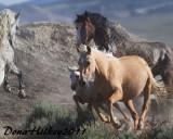 The Wild Horses of Sand Wash Basin