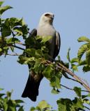 Summer 2012 Colorado Bird List
