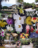 American Orchid Society collage
