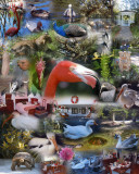 Flamingo Gardens collage