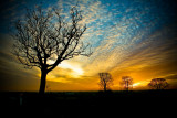 Nature at Sunset