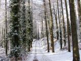 Snow Scene NE