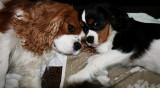 Ozzy & Boy