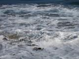 IMG_4657 Cold California beach waters