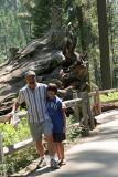IMG_5109 Sequoia
