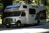 IMG_5343 Parked in the redwoods