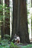 IMG_5339 The Redwoods