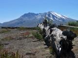 IMG_3593  Mt St Helens