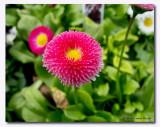 CR2_0546 Pink