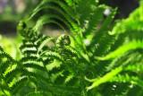 IMG_4783 Green