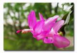 IMG_3922 Blooming again