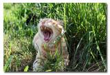 IMG_4915 Roar