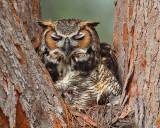 Rockabye Birdie in the Tree Top