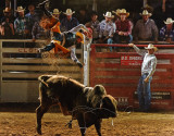 Pro Rodeo Action 2003-2010