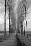 Silent path..