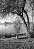 Meditation bench..