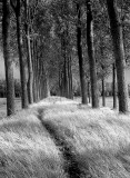Slow path..
