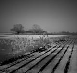 Frozen rows...