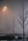 Winter Fog (27210)
