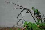 Vines, branch and shadow on garage door .. 4918