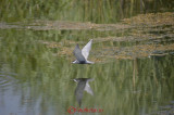 nikon 18-300_birds_2.JPG
