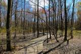 Early Springtime in Delhaas Woods