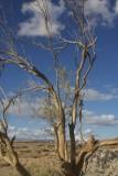 Purty Tree