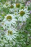 07/01/11 - Fantasy Garden , 3 (100% in-camera)