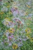 07/07/11 - Multiple Exposure Garden