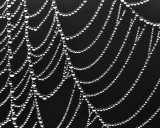 07/11/11 - Your Basic Spider Web