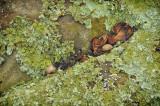 05/04/12 - Acorn, Lichen & Boulder