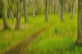 05/10/12 - Woodland Path