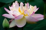 05/22/12 - Lotus