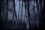 05/25/12 - Spooky Woods (multiple exposure)