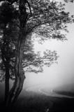 05/27/12 - Black & White Delight