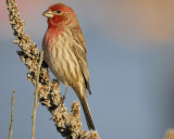 1610_finches