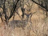 IMG_7530 Deer.jpg