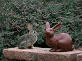 IMG_4250 Two Bunnies.jpg