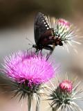 IMG_4601  butterfly.jpg