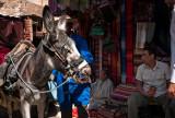48-Morocco2©ALBERT_ENGELN.jpg