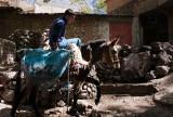 63-Morocco2©ALBERT_ENGELN.jpg