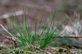 Grass in European Spruce Forest
