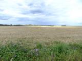 Clouds & fields