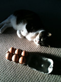 Lily & the eggs