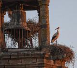 Hvid Stork_IMG_6117_Trujillo Spanien.JPG